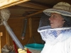 Absaugen von Flugtieren der Mittleren Wespe (kleine Hornisse)