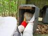 Umsiedlungskasten im Wald