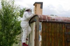 2012 - Umsiedlung Hornissen in einem Bauwagen