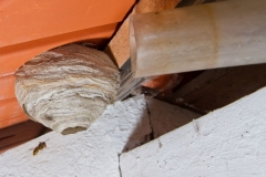 2013 - 2015 - Umsiedeln von Wespen und Hornissen